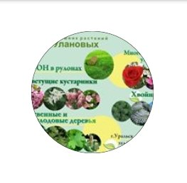 Уланов П.С., КХ, Цветы, Уральск