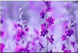 Анастасия, сеть салонов цветов и сувениров, Цветы, Калининград
