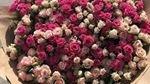 Company image - Цветы
