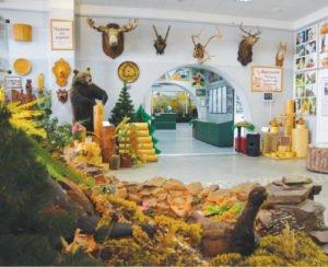 Музей леса по Красноярскому краю,Музей,Красноярск