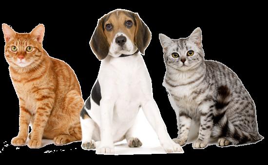 Тамасина,Ветеринарная клиника, Зоомагазин, Ветеринарная аптека,Юрга