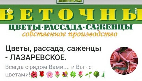 Лазаревское Интернет Магазин Ярославль