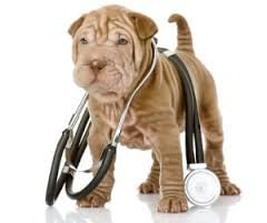 Ветеринарная клиника Мой питомец,Ветеринарная клиника, Зоомагазин, Ветеринарная аптека,Красноярск