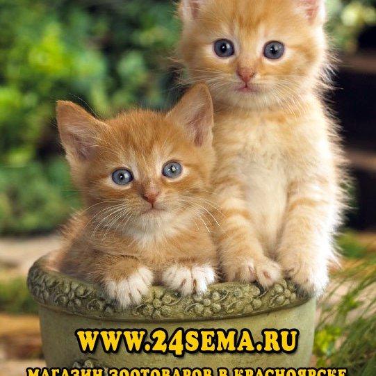Зоомагазин Сёма,Зоомагазин, Интернет-магазин,Красноярск