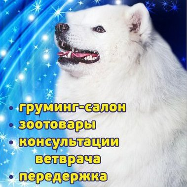 ЛапУсики,Зоосалон, зоопарикмахерская, Зоомагазин,Красноярск