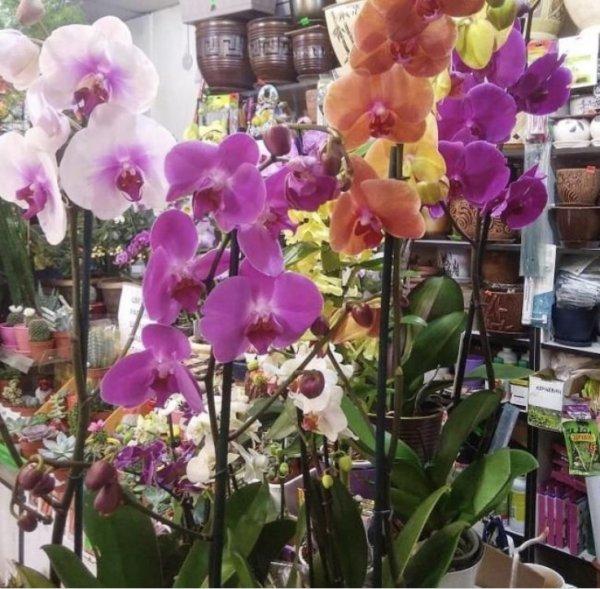 Флоридея,магазин цветов и подарков,Нальчик