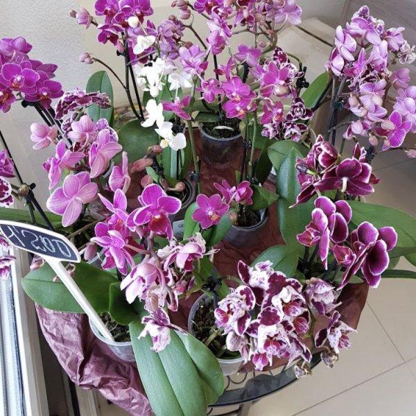 Цветочный павильон,,Нальчик