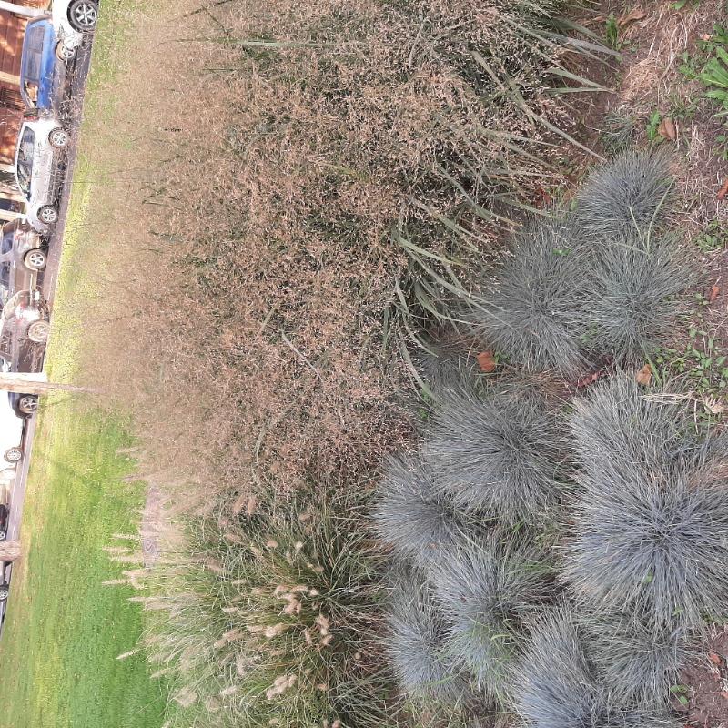 Травы Юга, Ландшафтный дизайн , Сочи