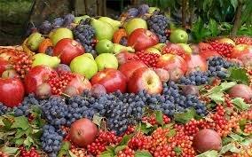 логотип компании Саженцы плодовых и ягодных культур