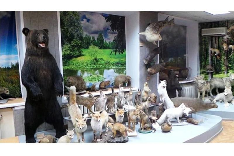 Зоологический музей Института биологии,Музей,Тюмень