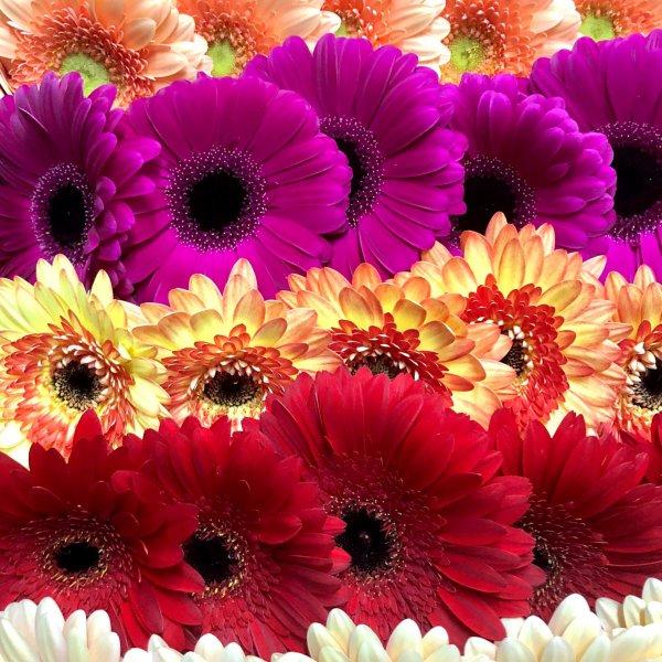 Престиж букет, бутик цветов и подарков, Тобольск
