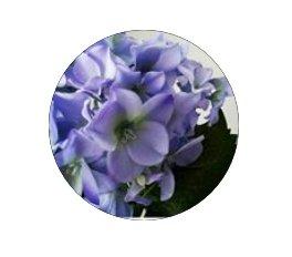 GreenArt, магазин подарков и цветов, Сувениры, Посуда, Цветы,,  Актобе