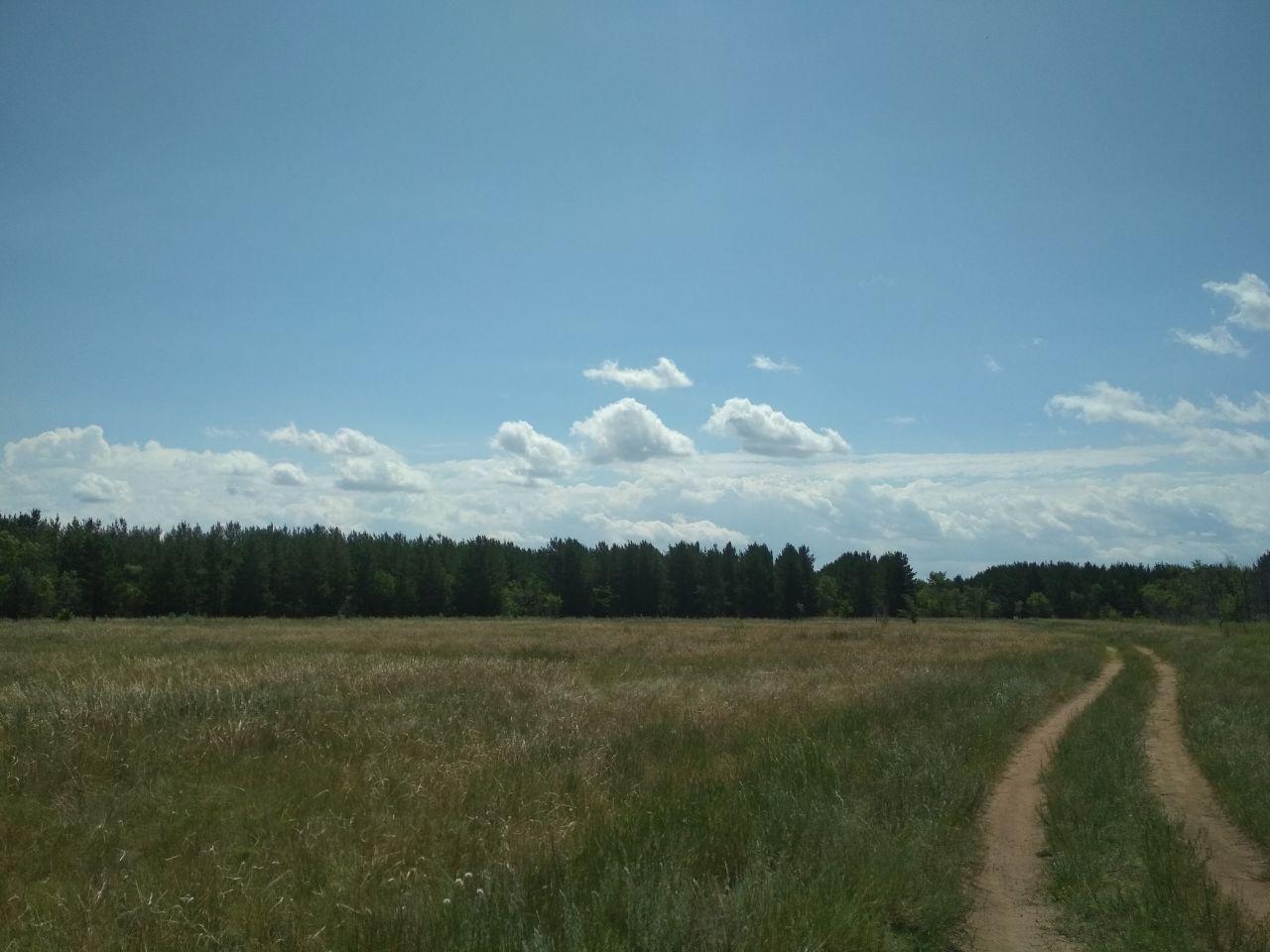 Жителей Шахтинска предупредили что нахождение в лесопосадке является нарушением