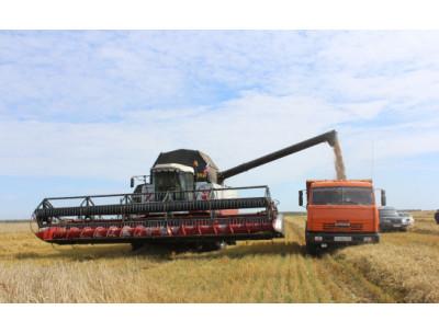 Порядка 70% урожая убрано с полей Куйбышевского района