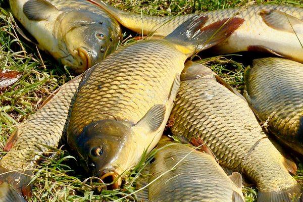 В Азовском районе задержали двух браконьеров в запретной зоне