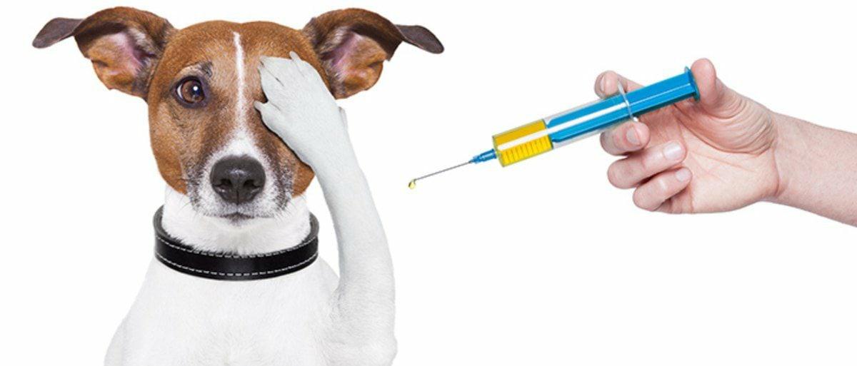 В Можге поставят прививки от бешенства кошкам и собакам