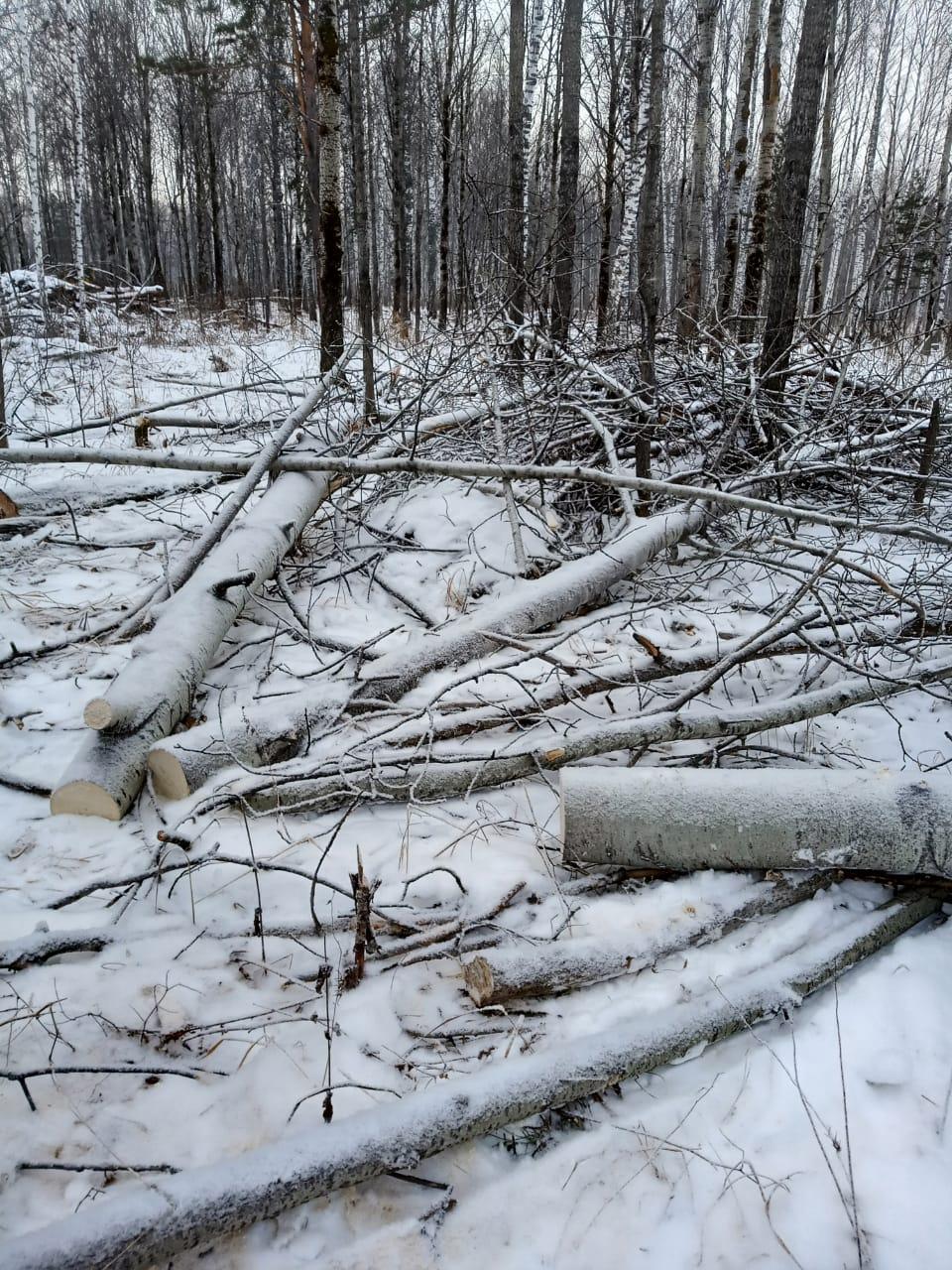 Кузбассовец нарубил дров на два миллиона рублей