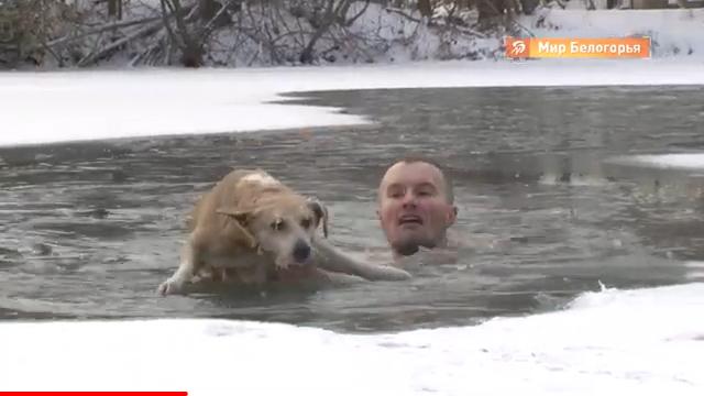 Журналист спас тонущую собаку (видео)