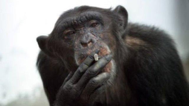 В большинстве своём , азовчане любят свой город : «Азовские приматы »