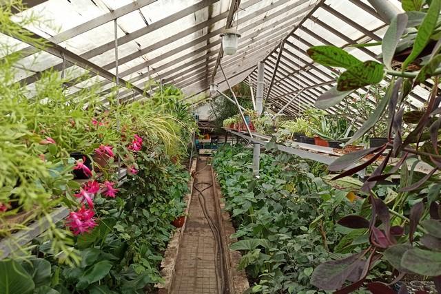 Весной Азов  украсят десятки видов оранжерейных растений
