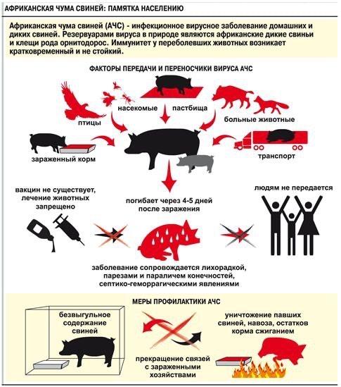 Уважаемые можгинцы, занимающиеся разведением и содержанием домашних свиней!