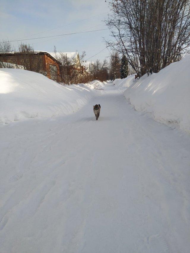 Завтра днëм в Удмуртии температура воздуха составит -8..-13°С, ожидается снежная и ветреная погода