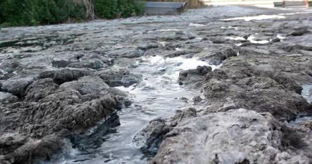 Экокатастрофа в Азовском районе