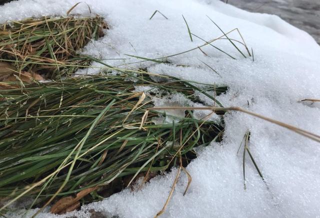 Красноярцев ждет теплая рабочая неделя с ночными заморозками