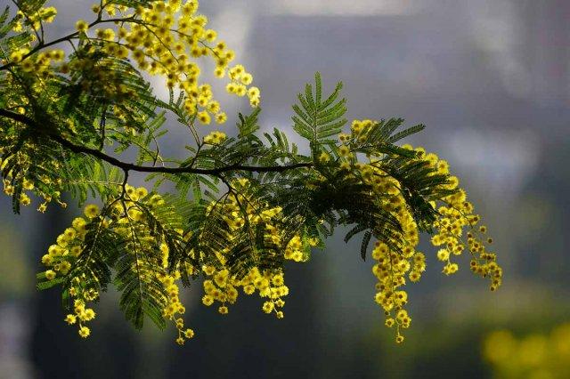 8 марта в Азове будет солнечная погода