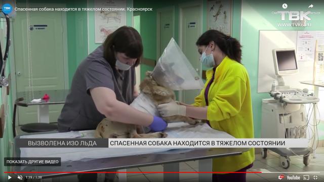 Ветеринары рассказали о состоянии собаки, сбитой поездом под Красноярском