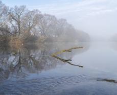Экологическое бедствие :  в притоке Дона погибла рыба