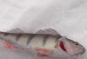 В Красноярске прошли соревнования по подледной рыбалке
