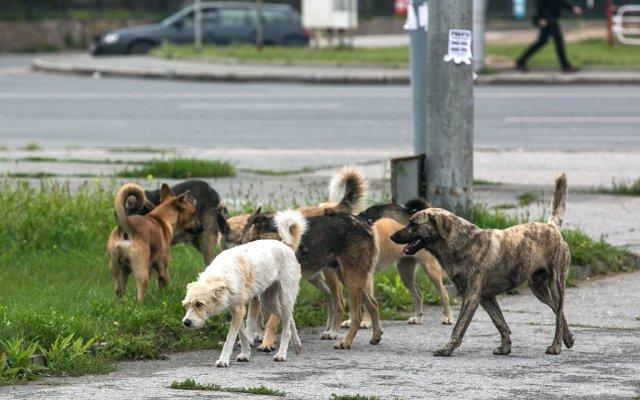 Госдума хочет усыплять бездомных собак