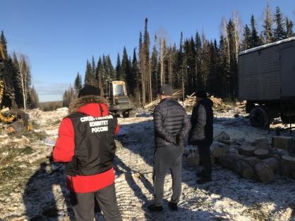 Лесники уничтожили более 1,5 тысяч здоровых деревьев