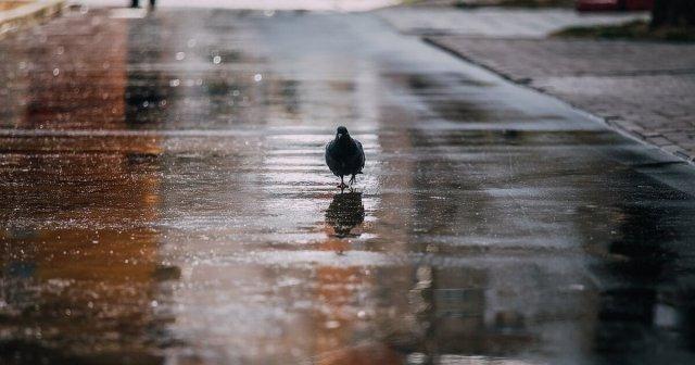 Когда в Ростовской области перестанут лить дожди