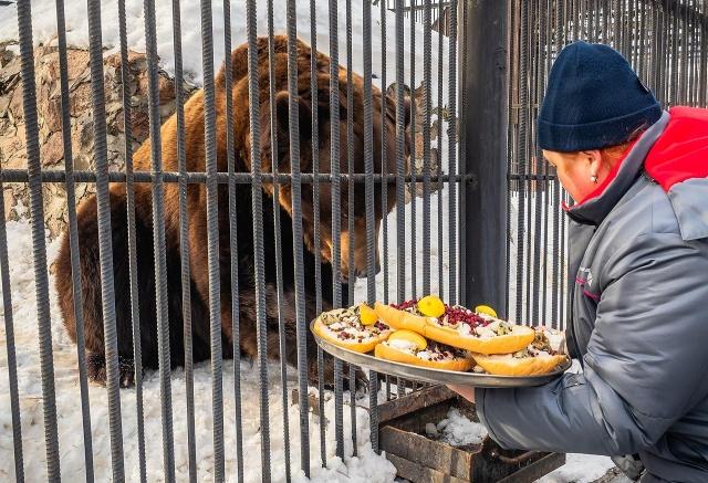 Проснулись медведи в красноярском Роевом ручье