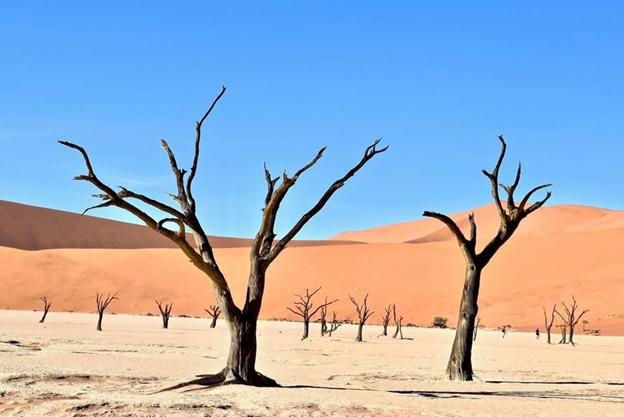 Как экологи пытаются спасти нашу планету?