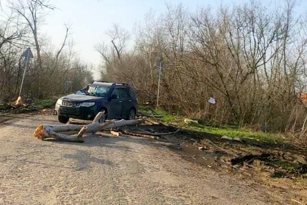 В районе посёлка Овощной Азовского района на крышу автомобиля упало сгнившее дерево
