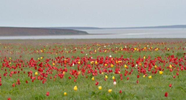Похолодание ожидается в Ростовской области в последнюю неделю апреля