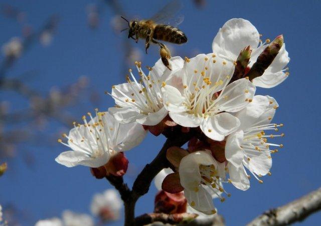 В последний день апреля в Азове потеплеет до +20