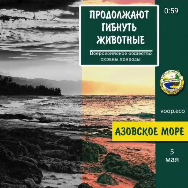 На берегу Азовского моря массовый падеж птиц, рыбы, черепах, дельфинов.