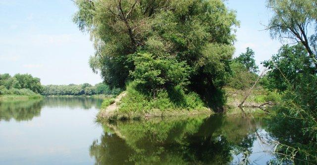 Состояние реки Дон сравнили с экологическим бедствием