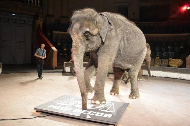 Ростовский цирк проверил здоровье своих выступающих животных