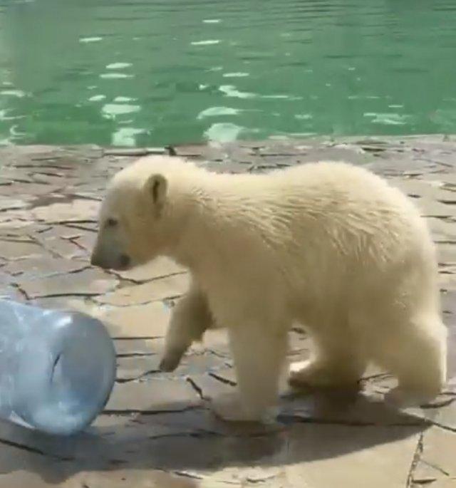 Медвежонку Айке из ростовского зоопарка исполнилось полгода!