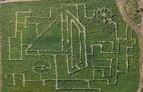 Под Таганрогом открыли первый в Ростовской области кукурузный лабиринт