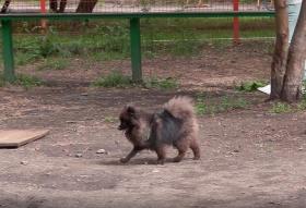 Жители Октябрьского района вынуждены искать места для прогулок с собаками: «никакой шаговой доступности»