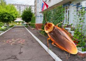 В Красноярском детском саду родители заметили тараканов