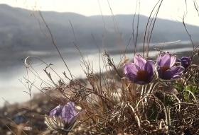 Прошли слушания по благоустройству «Красивого берега» в Красноярске: что думают жители