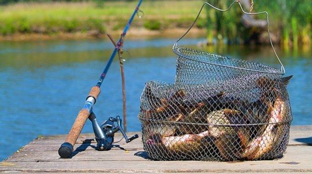 У обитающей в Ростовской области рыбы нашли опасные для человека болезни