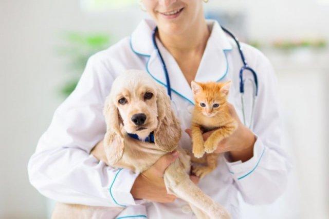 В Азове пройдет традиционный день льготной стерилизации животных-компаньонов
